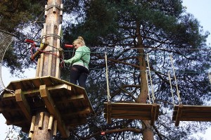 Hire adventure park for event tree top challenge